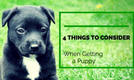 Four Things to Consider When Getting a Puppy